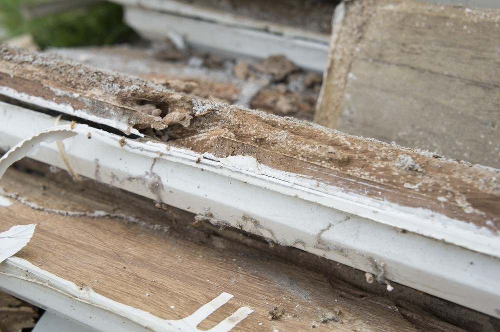 how to know if you have termites in mobile home