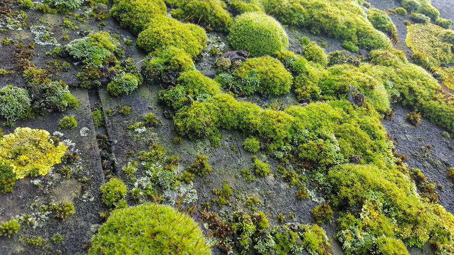 Is Mold or Algae Growing on the Shingles of Your Charlotte Home Roof
