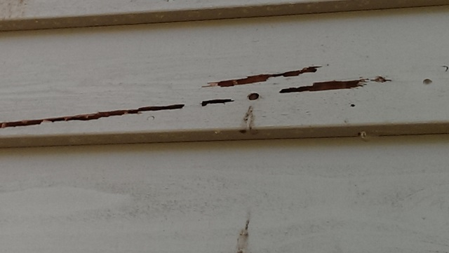 Could an uninvited houseguest be causing damage to your Charlotte home?